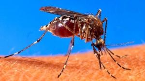 mosquito-arm